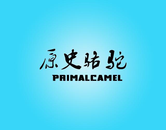 原史骆驼 PRIMALCAMEL