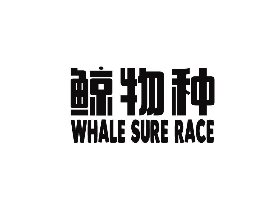 鲸物种 WHALE SURE RACE