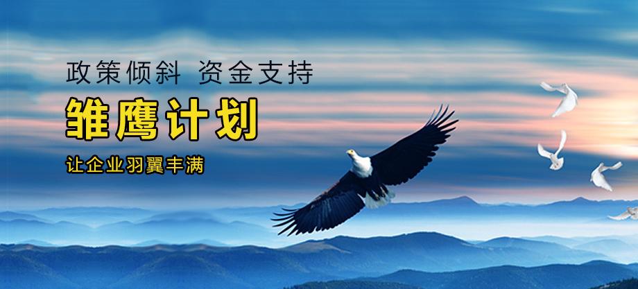 雏鹰计划项目申报